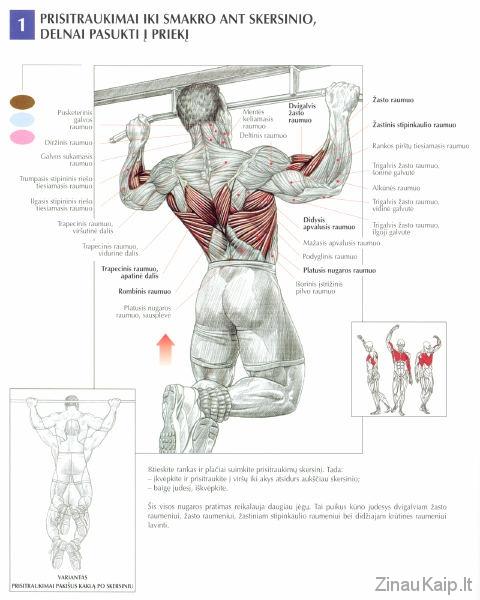 Kaip_daryti_prisitraukimus-raumenys