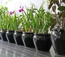 Kaip teisingai persodinti gėles