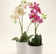 Kaip prižiūrėti orchidėjas