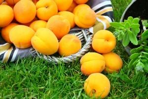 Kaip auginti abrikosus