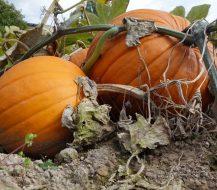 Kaip suplanuoti sodo darbus metams į priekį