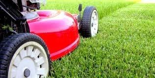 Kaip sodinti ir prižiūrėti veją