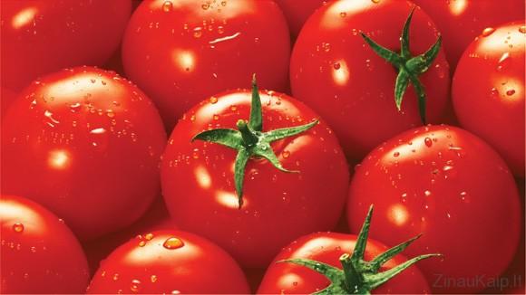 Kaip sodinti pomidorus | Pomidorų auginimas