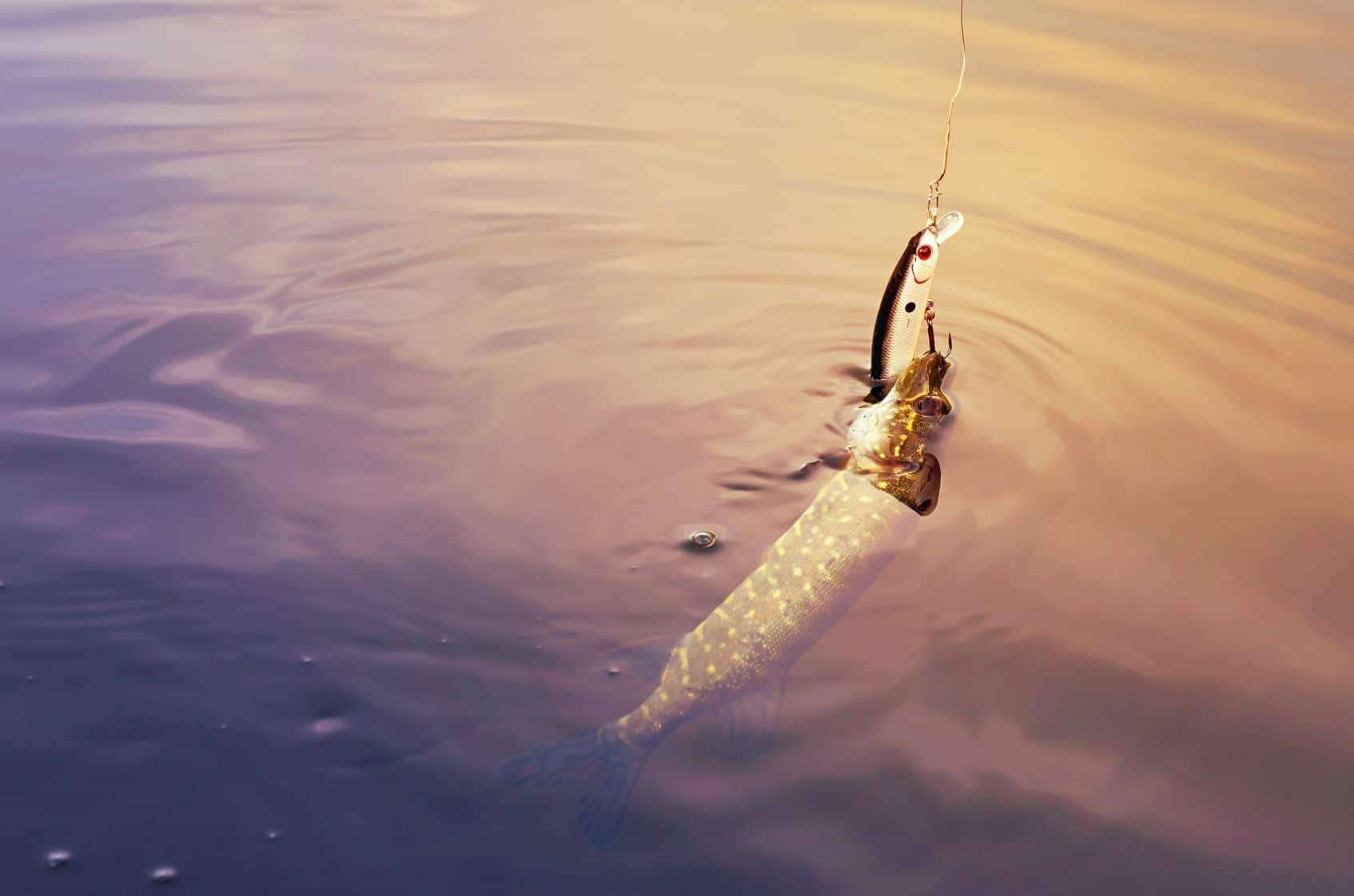 lydeku zvejyba