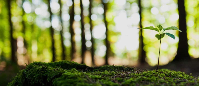 Ekologiškų prekių parduotuvės Lietuvoje