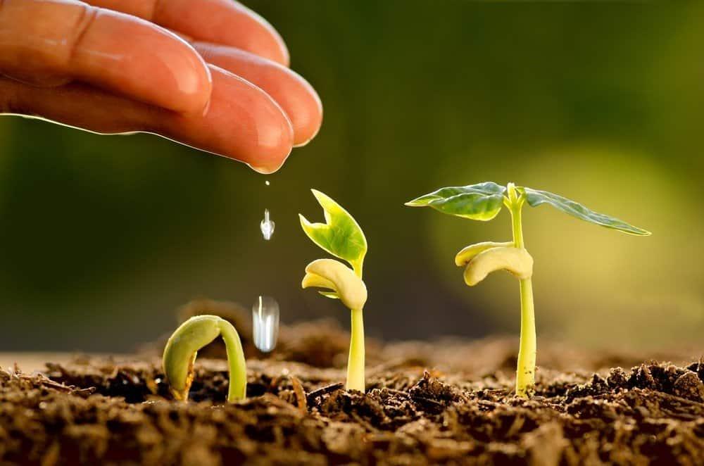 Augalų sodinimas pagal Mėnulio fazes